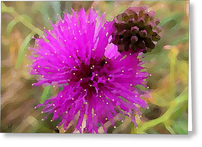 Catclaw Pink Mimosa  Greeting Card