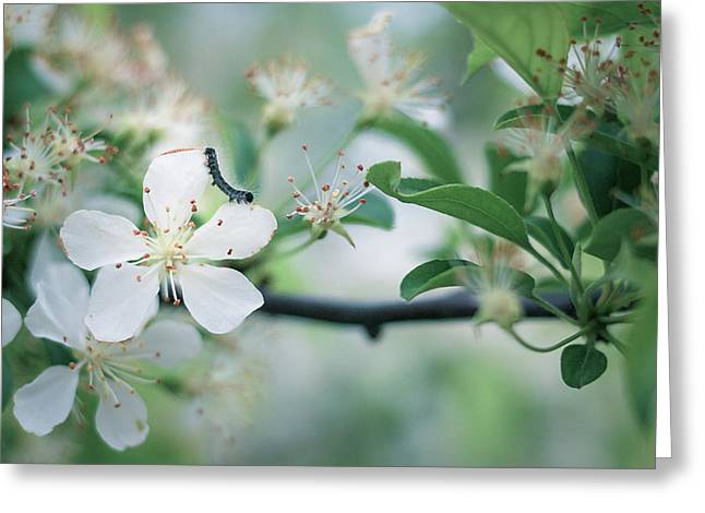 Caterpillar On A Tree Blossom Greeting Card