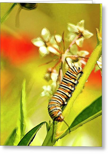 Caterpillar Stage 2 Greeting Card by Geraldine Scull