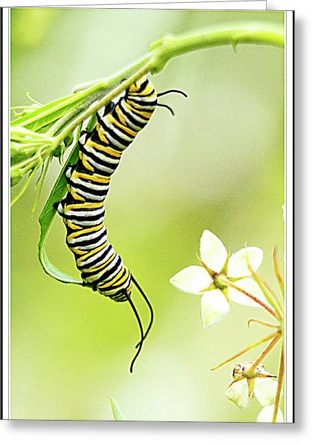 Caterpiller On Plant Greeting Card by Geraldine Scull
