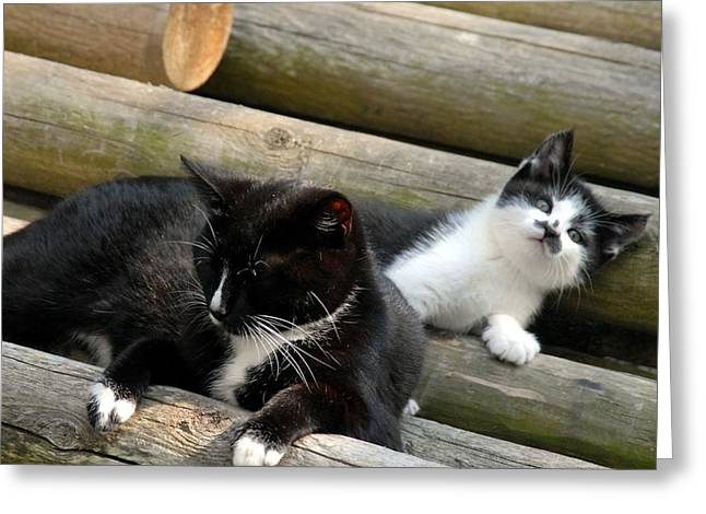 Recently Sold -  - Litter Mates Greeting Cards - Cats 26 Greeting Card by Joyce StJames