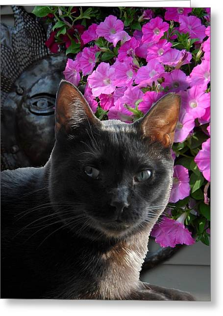Cats 31 Greeting Card by Joyce StJames