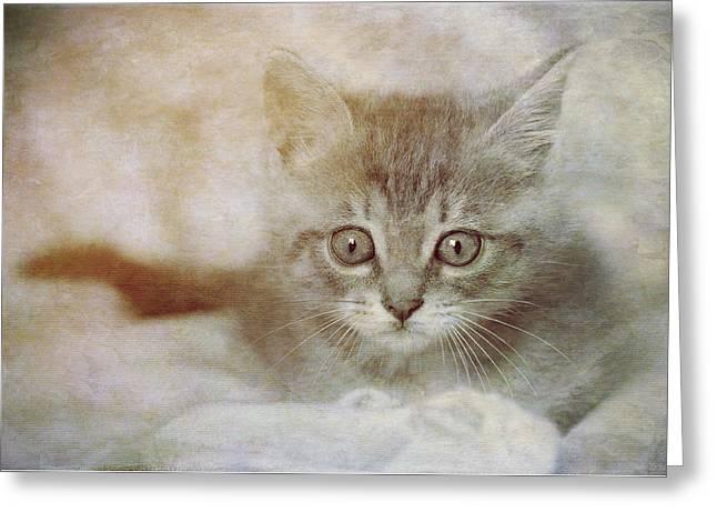 Cat's Eyes #07 Greeting Card