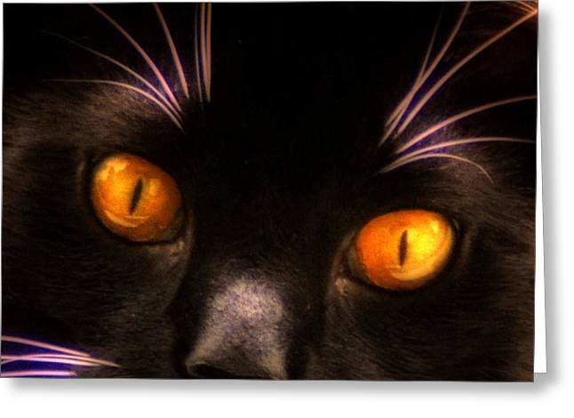 Cats Eyes Greeting Card by Bill Cannon