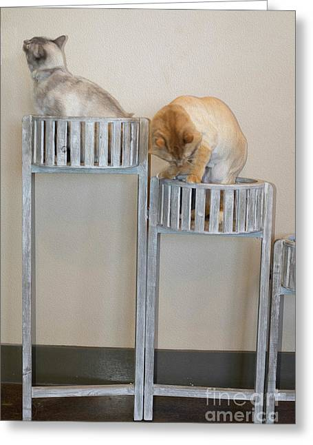 Greeting Card featuring the photograph Cats In Baskets by Ron Sadlier