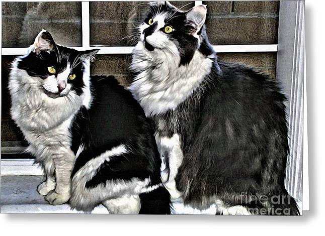Greeting Card featuring the photograph Cats In The Window by Beauty For God