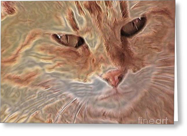 Cats Know Greeting Card