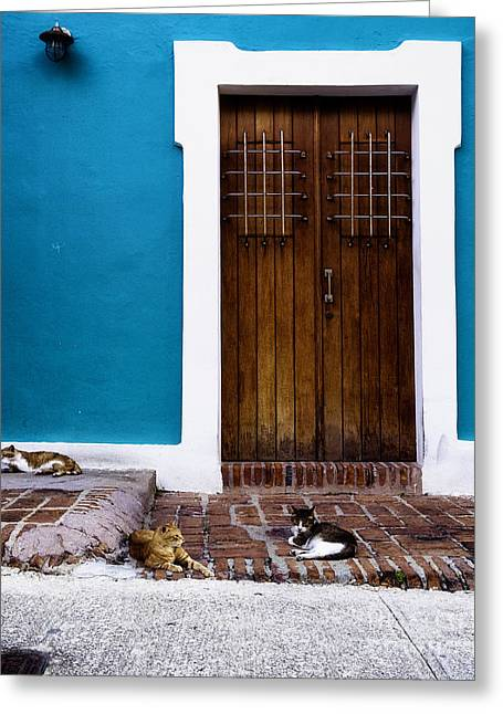 Cats Of Old San Juan I Greeting Card by George Oze