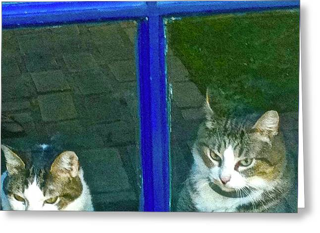 Cats On Baylor Street Greeting Card