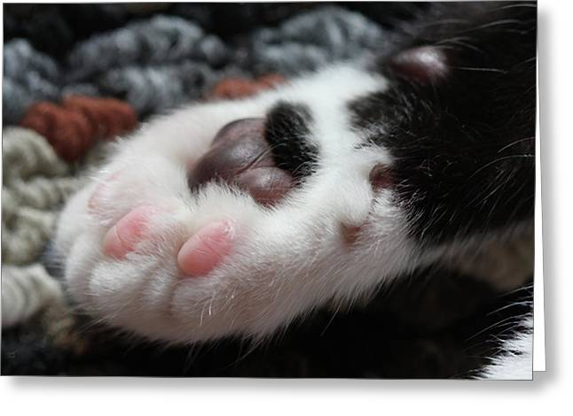 Cats Paw Greeting Card by Kim Henderson