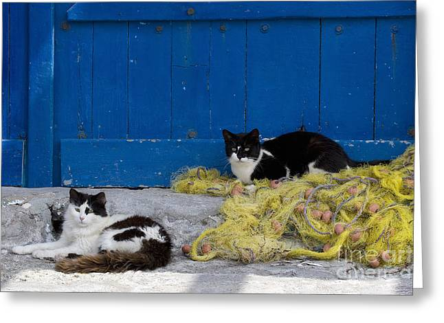 Cats With A Fishing Net Greeting Card