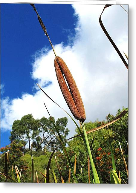 Cattails 2 Greeting Card