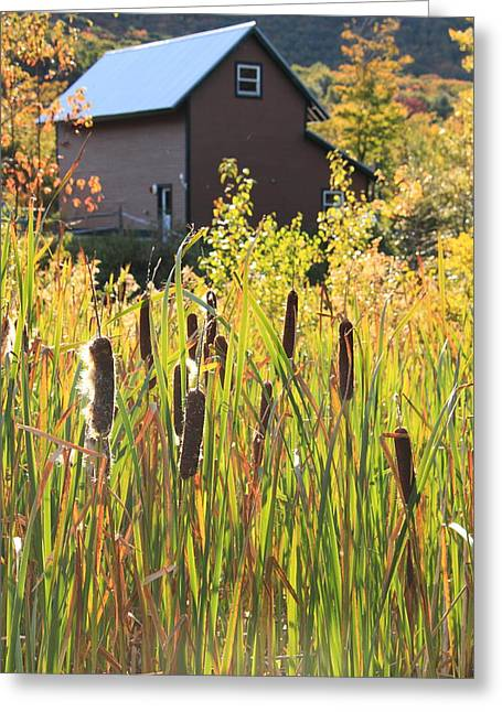 Cattails And Barn Greeting Card