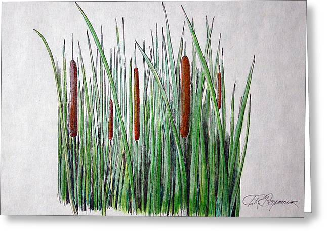 Greeting Card featuring the drawing Cattails IIi by J R Seymour