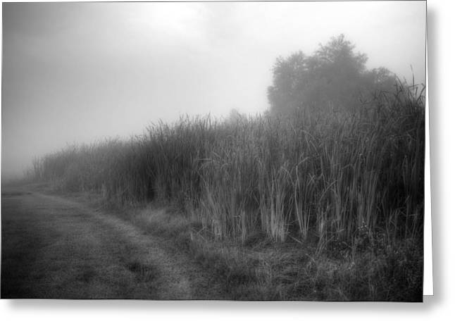 Greeting Card featuring the photograph Cattails In The Fog by Michael Colgate
