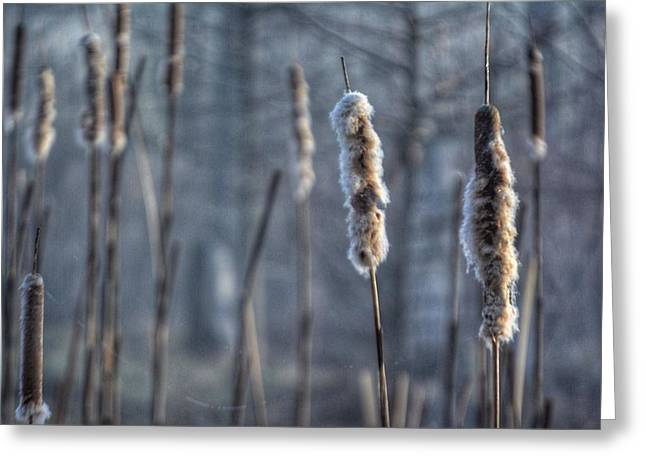 Cattails In The Winter Greeting Card by Sumoflam Photography