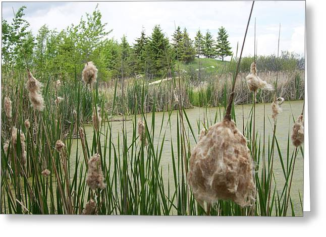 Greeting Card featuring the photograph Cattails by Mary Mikawoz