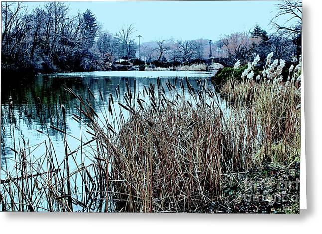 Greeting Card featuring the photograph Cattails On The Water by Sandy Moulder