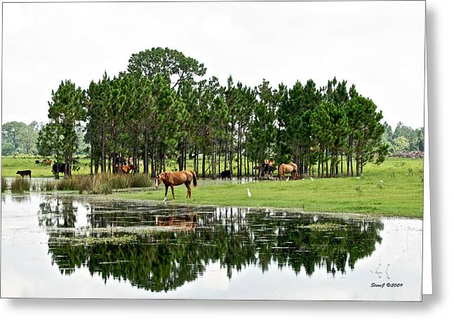 Cattle And Horse Ranch In Florida Greeting Card