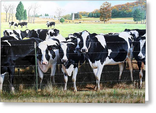 Cattle Call Greeting Card