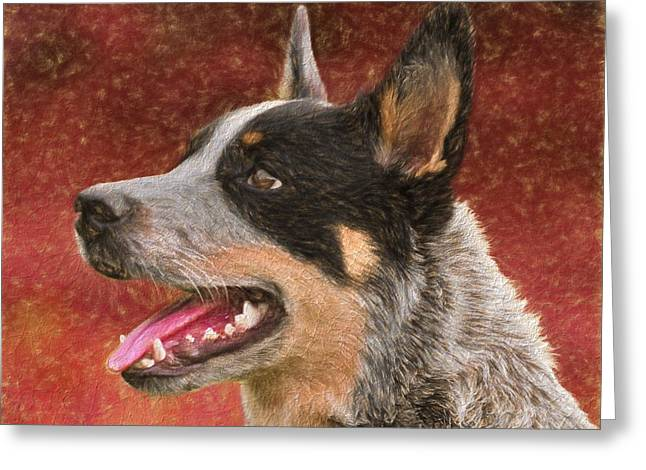 Cattle Dog On Red Greeting Card by Dan Sproul