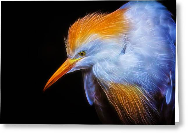 Cattle Egret Electrified Greeting Card by David Gn