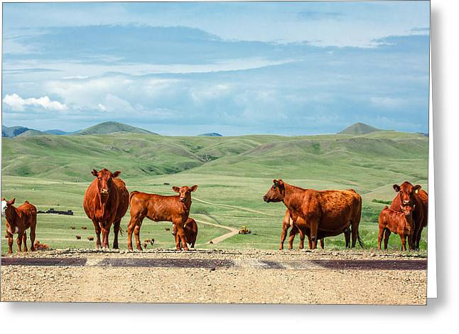 Cattle Guards Greeting Card by Todd Klassy