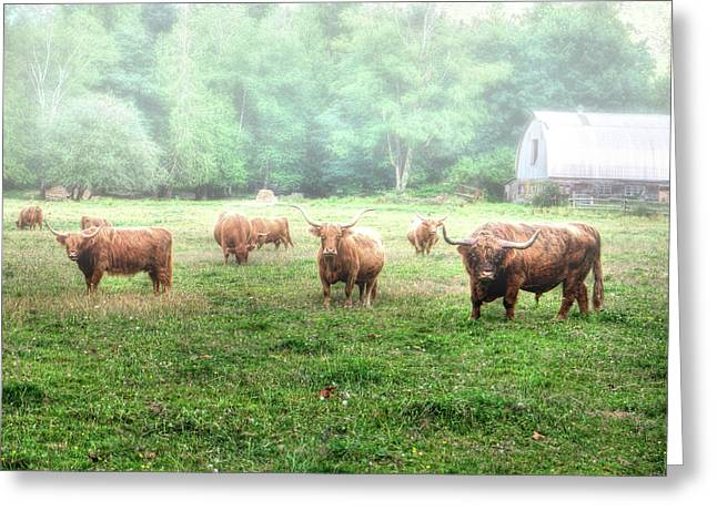 Cattle In The Mist Greeting Card