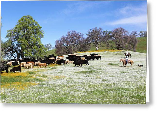 Cattle N Flowers Greeting Card