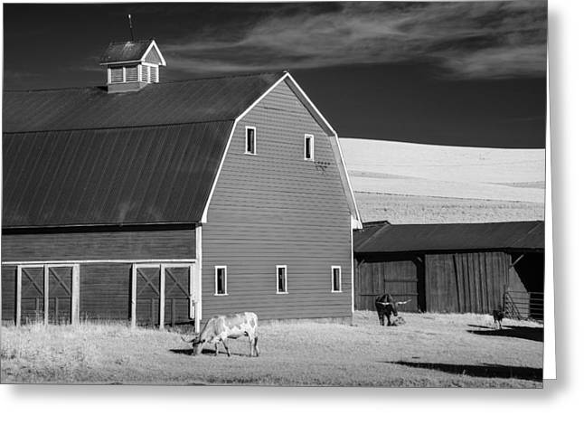Cattle On The Farm Greeting Card