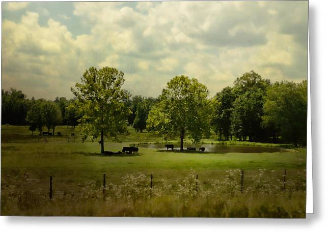 Cattle Pond In Summer Greeting Card by Jai Johnson