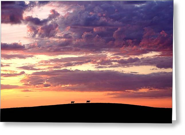 Cattle Ridge Sunset Greeting Card