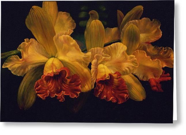 Cattleya Orchid Greeting Card by Carolyn Sterling