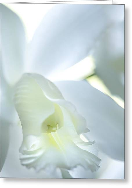 Cattleya Orchid #1 Greeting Card