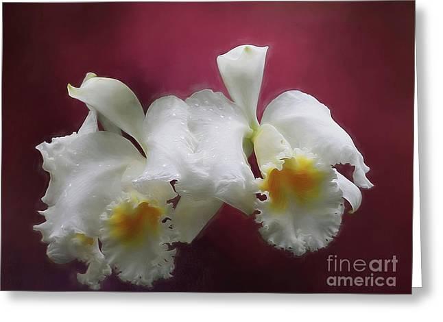 Cattleya Petals Greeting Card