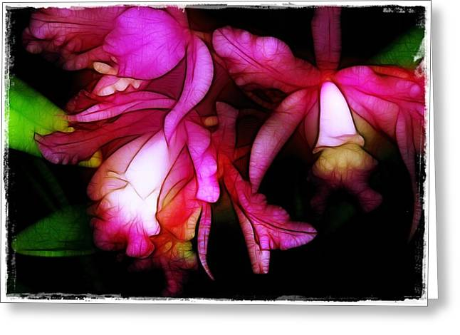 Orchid Show Greeting Cards - Cattleyas Greeting Card by Judi Bagwell