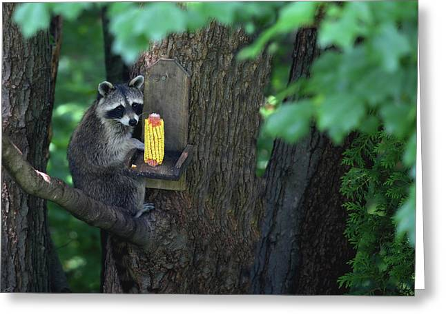 Caught In The Act Greeting Card by Karol Livote