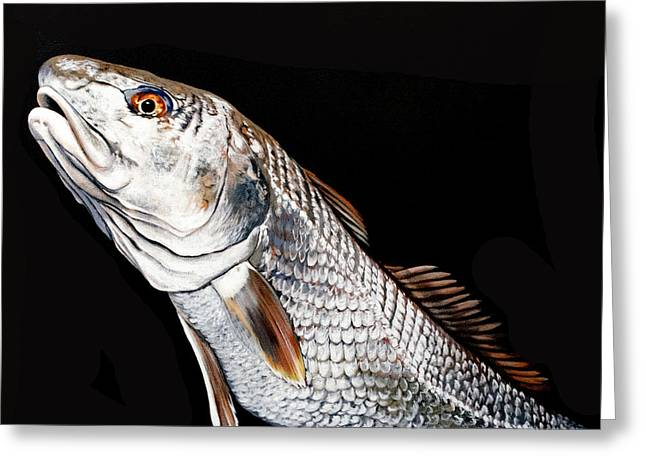 Caught In The Surf Redfish Greeting Card by Joan Garcia