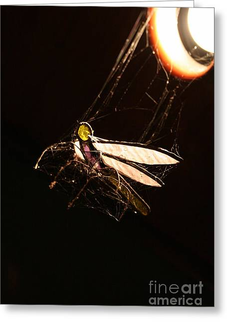 Caught Prey Greeting Card by Jorgo Photography - Wall Art Gallery