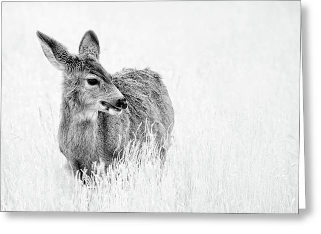 Mule Doe Greeting Card