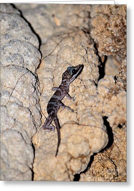 Cave Gecko Greeting Card by Fletcher & Baylis