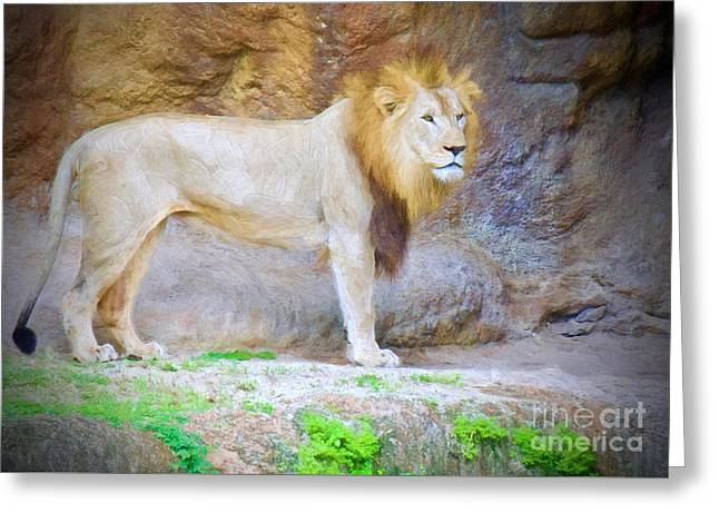 Caved African Lion Greeting Card by Judy Kay
