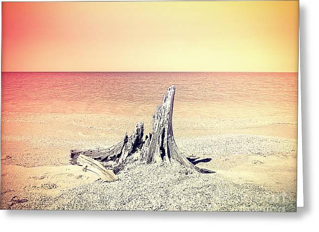 Caya Costa Driftwood Greeting Card