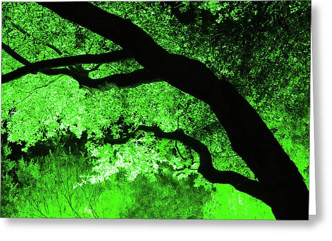 Cc11 Tree At Night Greeting Card by James D Waller