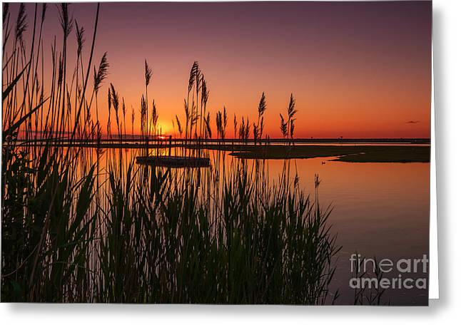 Cedar Beach Sunset In The Reeds Greeting Card