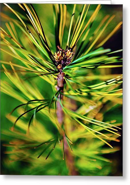 Cedar Branch Spring Greeting Card