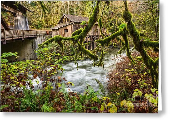 Cedar Creek Mill Mosses Greeting Card by Jamie Pham
