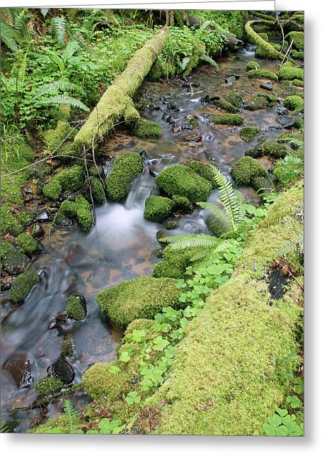 Greeting Card featuring the photograph Cedar Creek Near Cottage Grove Lake #3 by Ben Upham III