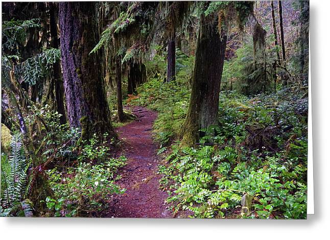 Cedar Creek Trail #3 Greeting Card