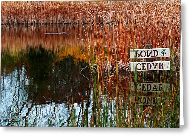 Cedar Pond Greeting Card by Robert Clayton